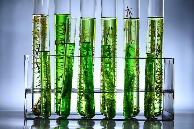 Tube de biocarburant à base d'algues dans un laboratoire de biotechnologie