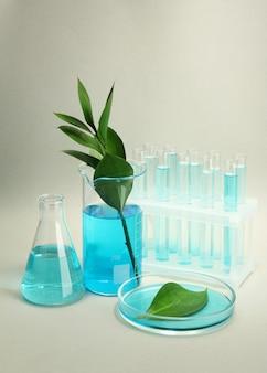 Tubes à essai et feuilles testées dans des boîtes de pétri sur gris