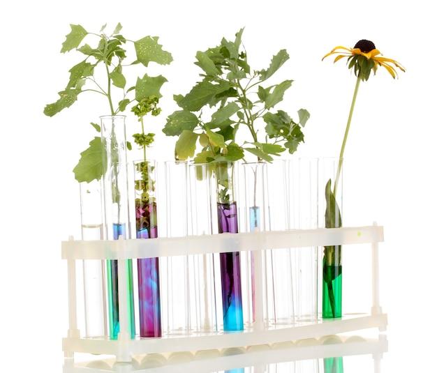 Tubes à essai avec une solution colorée et la plante isolée sur gros plan de surface blanche