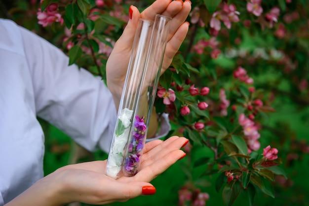 Tubes à essai en verre avec des pétales de fleurs multicolores dans les mains des femmes sur la floraison, se bouchent. processus de collecte des plantes pour l'industrie du parfum. image pour publicité avec espace copie.