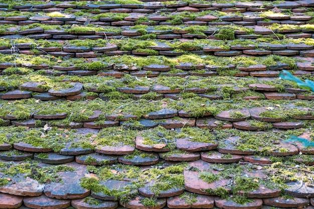 Tuiles anciennes envahies par la mousse verte en arrière-plan.