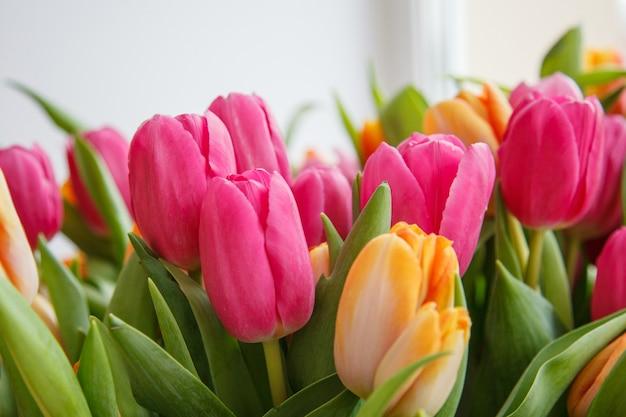 Tulipe. beau bouquet de tulipes. tulipes colorées.