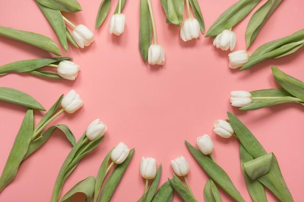 Tulipe blanche disposée en coeur sur rose millénaire. vue de dessus.