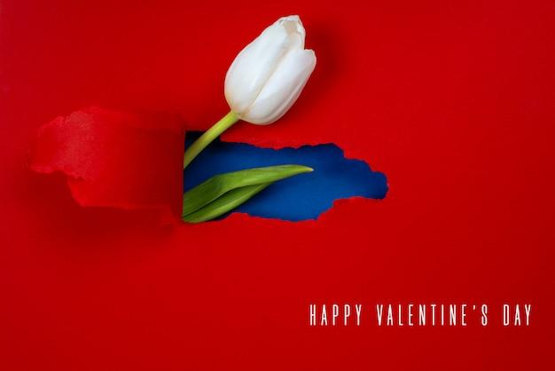 Une tulipe blanche est visible à partir d'un trou dans le papier rouge. a l'intérieur, une couleur bleue et une feuille verte sont affichées