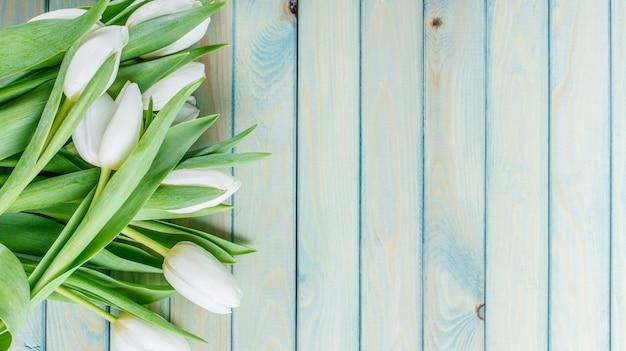 Tulipe de fleurs de printemps