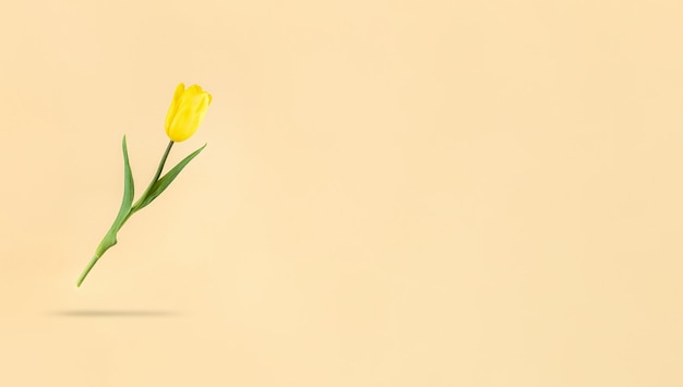 Tulipe jaune en lévitation sur fond beige et ombre en dessous. stock photo de vacances mimimaliste avec espace de copie.