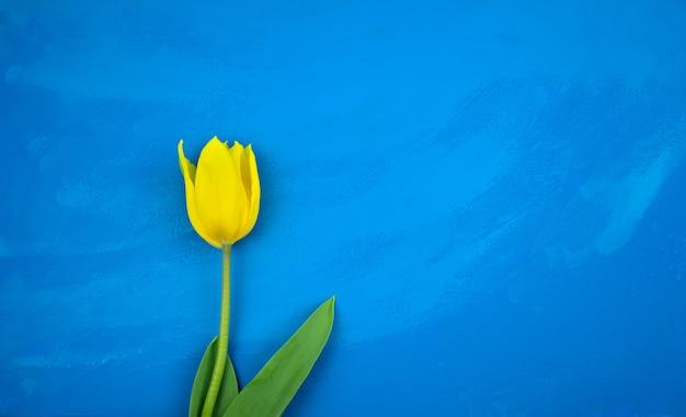 Tulipe jaune à plat sur fond de texture acrylique abstraite grunge océan bleu vif à la main.