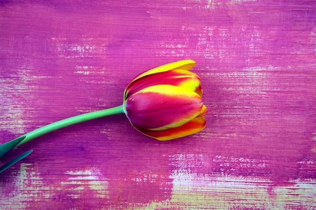 Tulipe magenta rouge pourpre à plat sur fond de texture abstraite de couleur pourpre dessiné à la main
