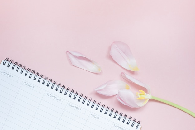 Tulipe rose avec planificateur de bureau vide ouvert flat lay