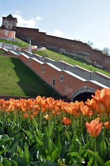 Tulipes au pied de l'escalier chkalov. nijni novgorod