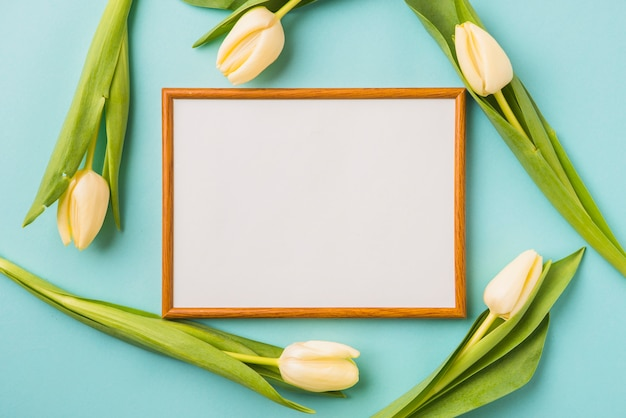Tulipes autour du cadre
