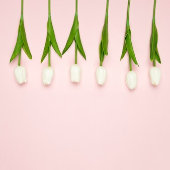 Tulipes blanches alignées sur la table