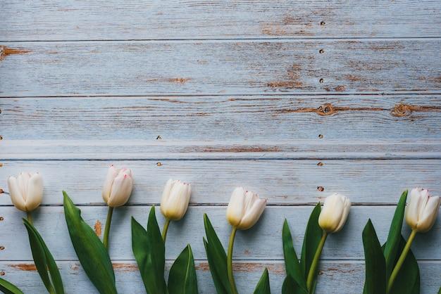 Tulipes blanches sur fond bleu en bois. composition à plat, vue de dessus avec espace de copie