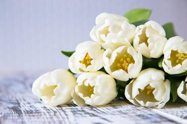Tulipes blanches fraîches sur fond clair. mise au point sélective
