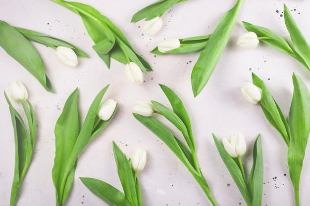 Tulipes blanches fraîches de printemps sur fond gris.
