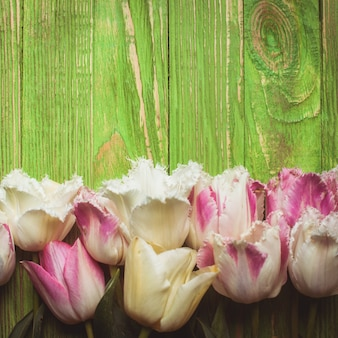 Tulipes bouclées roses et blanches sur un fond en bois vert avec espace de copie