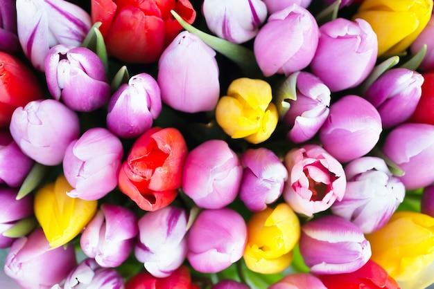 Tulipes colorées fraîches - fond de printemps nature. flou artistique et bokeh