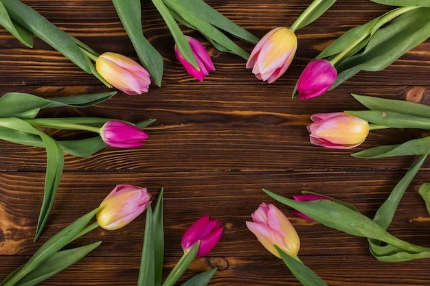 Tulipes colorées placées comme un cercle