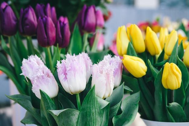 Tulipes de couleurs différentes sur le comptoir du magasin de fleurs
