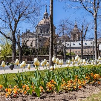 Tulipes dans le jardin d'un parc de la ville d'el escorial à madrid. l'unesco,