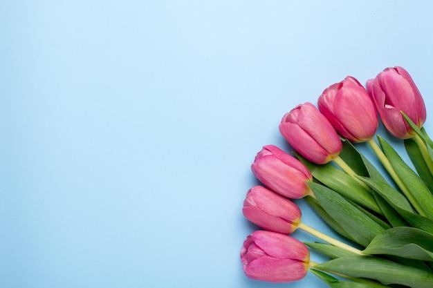 Tulipes de fleurs roses sur une surface bleue