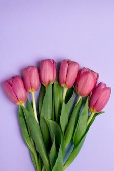 Tulipes de fleurs roses sur une surface lilas