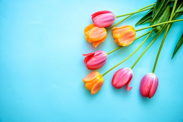 Tulipes sur fond bleu avec espace de copie