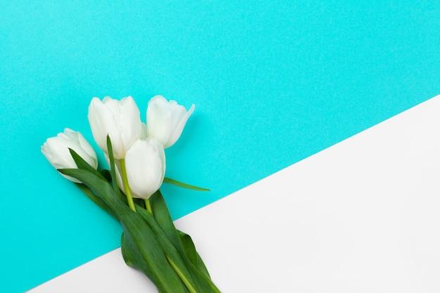 Tulipes fraîches blanches sur fond de papier de bloc de couleur