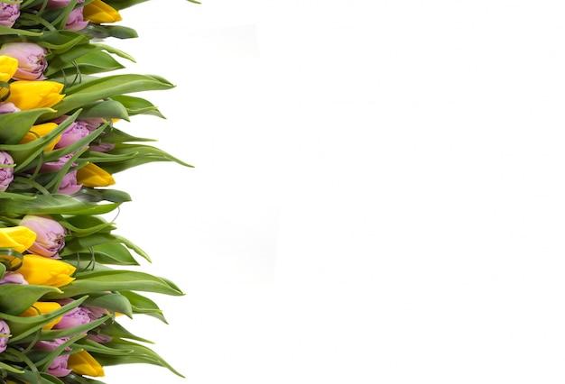 Tulipes jaunes sur fond blanc. cadre de fleurs.