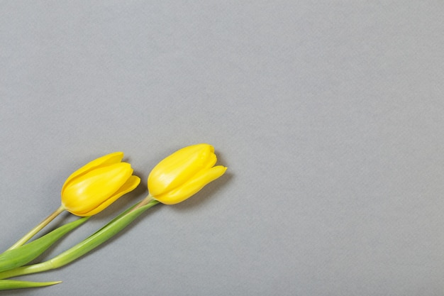 Tulipes jaunes sur fond gris