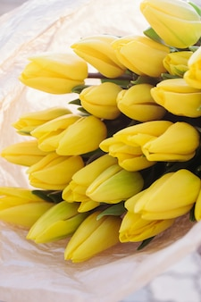 Tulipes jaunes. fond de printemps floral.
