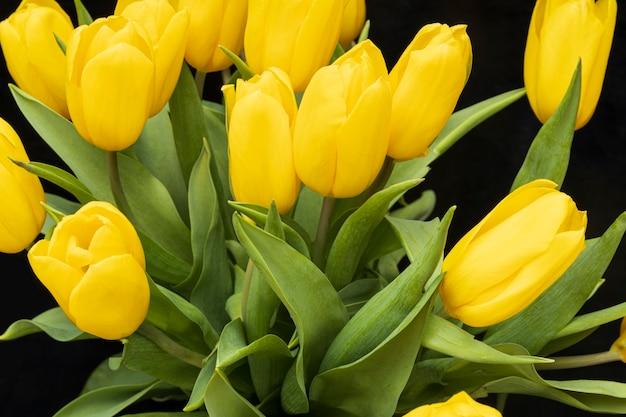 Tulipes jaunes sur un gros plan de fond noir. belles fleurs. la saint valentin. 8 mars. photo de haute qualité