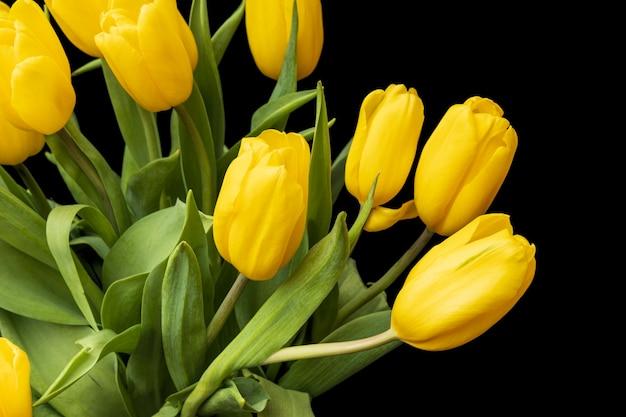 Tulipes jaunes isolées sur fond noir. belles fleurs. la saint valentin. . photo de haute qualité