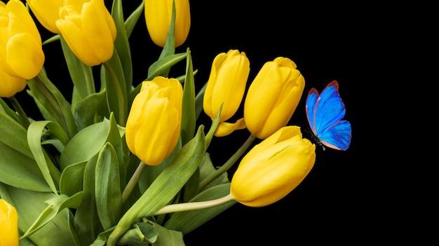 Tulipes jaunes avec un papillon bleu assis sur fond noir. beau bouquet de fleurs jaunes. papillon tropical coloré. photo de haute qualité