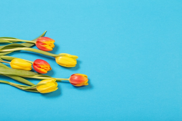 Tulipes jaunes et rouges sur fond bleu