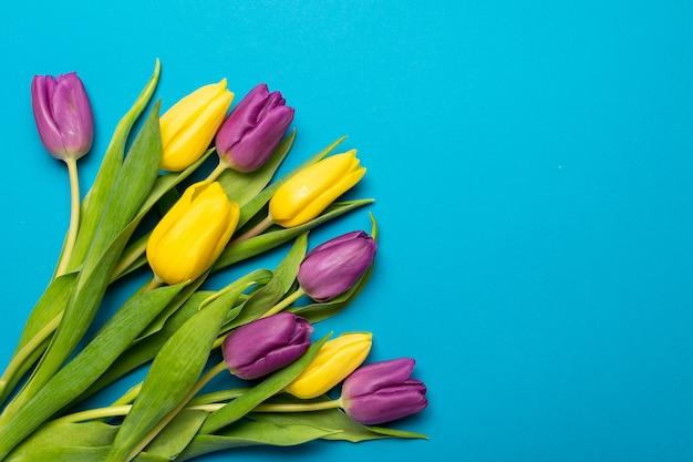 Tulipes jaunes et violettes plates florales s'étendent sur bleu
