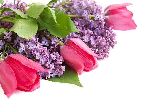 Tulipes lilas et rouges isolés sur fond blanc