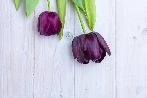 Des tulipes noires placées les unes à côté des autres derrière une surface blanche