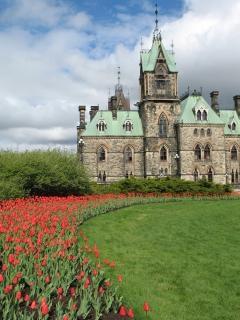 Tulipes d'ottawa, tulipes