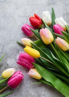 Tulipes de printemps colorées sur fond de béton