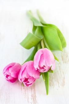 Tulipes roses sur blanc