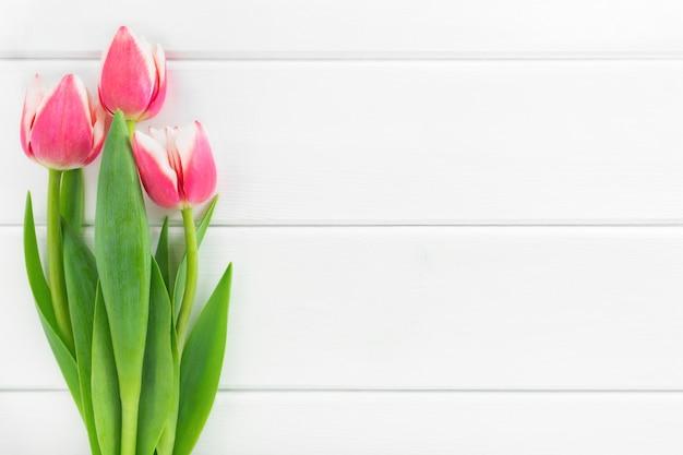 Tulipes roses et blanches sur bois blanc, pose à plat