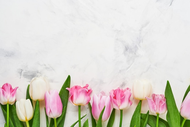 Tulipes roses et blanches sur fond blanc.