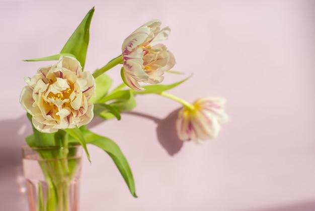 Tulipes roses et blanches sur fond rose