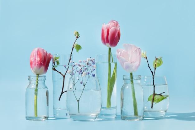 Tulipes roses et branches de bouleau fraîches déformées par l'eau liquide dans des verres sur bleu.
