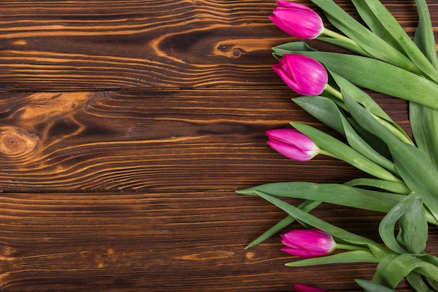 Tulipes roses dans la rangée