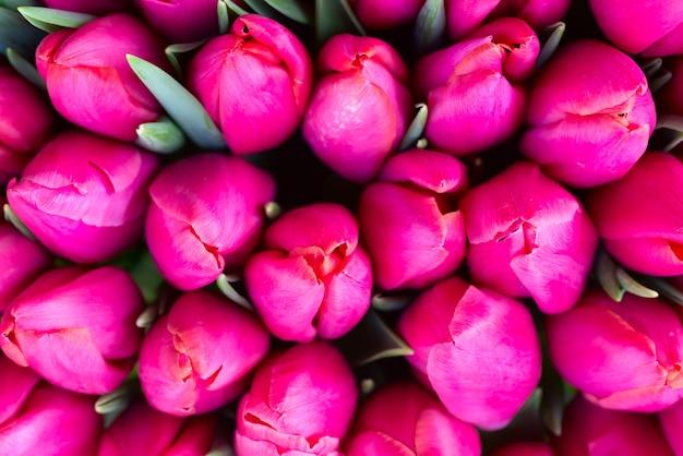 Tulipes roses fraîches avec des feuilles vertes - fond de printemps nature. flou artistique et bokeh