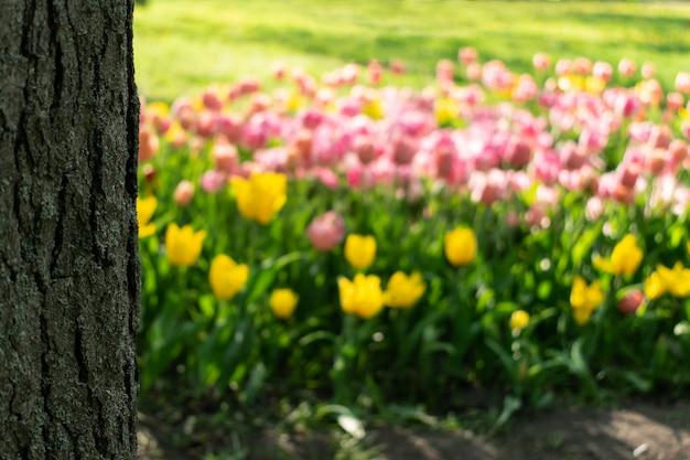 Tulipes roses et jaunes floues et tronc d'arbre