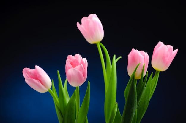 Tulipes roses.