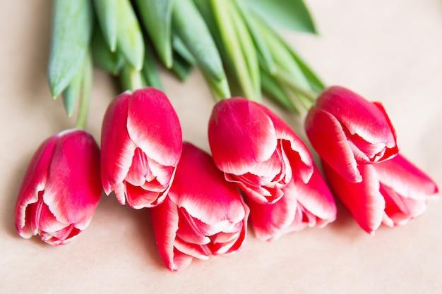 Tulipes rouges sur fond blanc. fête de la femme